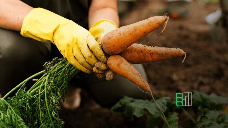 Branding_agricultura